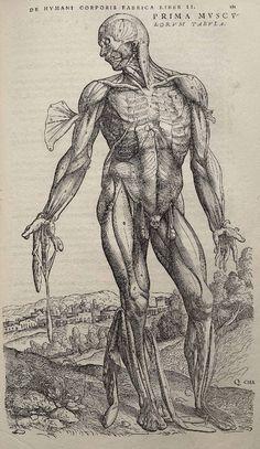 andreas vesalius: de humani corporis fabrica 1543