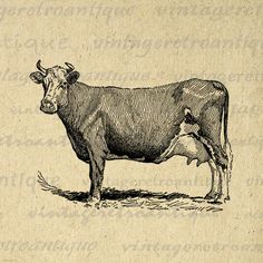 Vintage Cow Clip Art | Cow Printable Farm Animal Download Illustrated Image Vintage Clip Art ...
