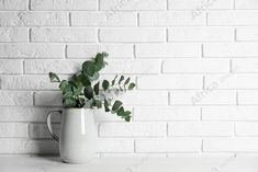 Beautiful eucalyptus branches in vase on white wooden table near brick wall. Space for text. Buy Creativity & Imagination. Take a look at what the world's best photographers have to offer at africa-images.com Vase With Branches, Eucalyptus Branches, Best Photographers, Wooden Tables, Wall Spaces, Brick Wall, Imagination, Creativity, Africa