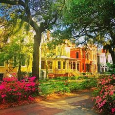 Whitaker Street in full bloom in Savannah, GA