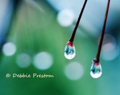 Shop  SeeLifeShine  Sparkling Nature Photography, Beauty Inspired