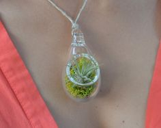 Hey, I found this really awesome Etsy listing at https://www.etsy.com/listing/156475967/air-plant-terrarium-pendant-air-plant