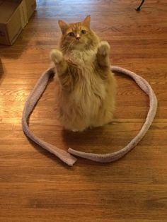 Let's see how many cats we can trap!!! | Can You Prank Your Cat With This Brilliant Trick?