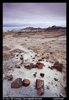 Colorful slices of petrified wood and badlands in Long Logs area. Petrified Forest National Park, Arizona
