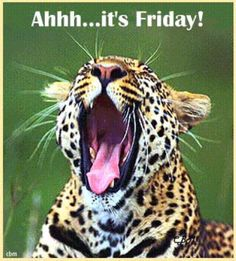 Happy Friday! #TGIF #Friday #weekend