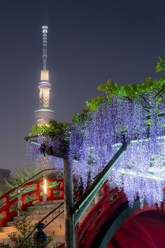 Wisteria at Kameidoten-jinja, Tokyo ,Japan Beautiful World, Beautiful Places, Beautiful Pictures, Lovely Things, Places Around The World, Around The Worlds, Tokyo Skytree, Go To Japan, Photos Voyages