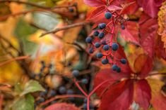 Photo by Came Lia Rowan, Berries, Fruit, Spring, Plants, Bury, Planters, Plant, Planting