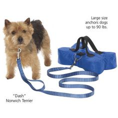 D11447 BL S - Dog Beds, Dog Harnesses and Collars, Dog Clothes and Gifts for Dog Lovers | In The Company Of Dogs