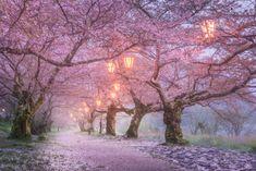 18 Fotografías de Cerezos Japoneses en Primavera que Te Encantarán                                                                                                                                                                                 Más