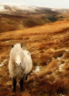 Welsh Pony <3 Time for a bang trim!