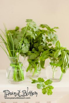 Get the most out of your herb garden: Harvesting and recipe tips for some of the most popular and easy to grow herbs! Fantastic ideas for the herb growing novice!
