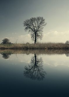 Mirrortree_2513_by_FKSD-Photo