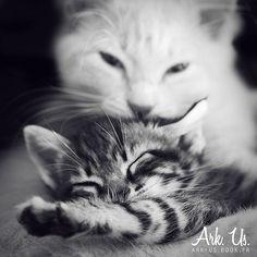 Cats love  www.arkuswork.com FB : https://www.facebook.com/pages/Ark-Us-/115025235174714