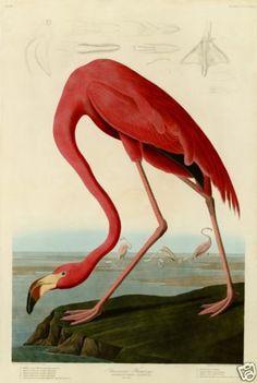 Audubon prints are truly beautiful.