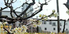 Aria di #primavera a @CastleOfAngels #fioridipesco! #location #events #beautifull #italy