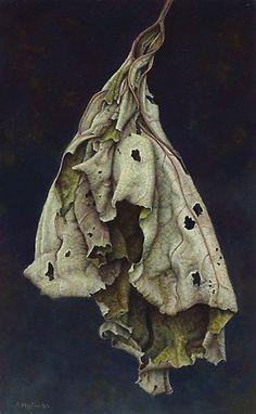 Aad Hofman. Dried up leaf, still life, desaturated color, holes, dark background
