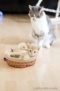 La gatta col piatto che scotta: QUELLO CHE PIACE NON BASTA MAI