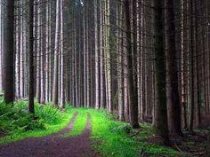 Pine Forrest Trail