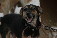 Este era Rocky, ahora Merlín. Tenia 1 año cuando lo encontramos atado a una cadena. Retraído y asustadizo al principio.  Ahora vive con una familia que lo adora, en compañía de  otro perro, su inseparable amigo Klint.