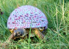 Lol crocheted turtle cozies