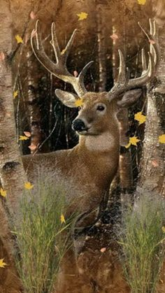 Top Whitetail Deer Hd Wallpapers Wallpapers Shared