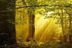 Golden Forest, The Netherlands