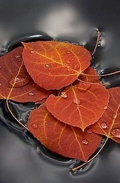 Raindrops on Falling Leaves Orange Grey, Burnt Orange, Orange Color, Autumn Rose, Autumn Leaves, Colour Board, Color Combos, Mother Nature, Plant Leaves