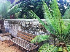 Adventureland vibes #adventureland #latergram #royalbotanicalgardens #sydney #feelslikeadventure #details #sydneysider #sydneyigers #wanderlust #liongatelodge