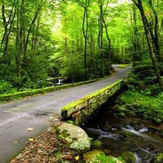 Best Hiking Trails Of The Great Smoky Mountains National Park. Here is a look at some of the most popular trails in the park.