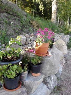 Ruukut kellarin kiveyksellä Plants, Plant, Planets