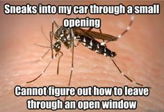 87 Best Silly Mosquito Jokes images in 2017 | Funny images