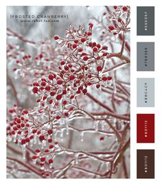 Color Scheme: Frosted Cranberry    Designing a blog or a business card? Need some help choosing colors? Rebel Lux is here to help.  #colorpalette #colorscheme #graphicdesign #designer #winter #cranberry #inspiration