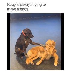 Dog And Puppies Drawings .Dog And Puppies Drawings Super Cute Animals, Cute Little Animals, Cute Funny Dogs, Cute Funny Animals, Funny Animal Memes, Funny Animal Pictures, Cute Puppies, Dogs And Puppies, Doggies