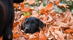 Buried in leaves!