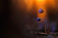 Amazingly lit... Sandra Bartocha - Glowing in the Spring