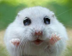 Look at its beady eyes! <3