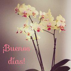 ¡Feliz Jueves a todos! #ideassoneventos #blog #bloglovin #organizacióndeventos #comunicación #protocolo #imagenpersonal #bienestarybelleza #decoración #inspiración #bodas #buenosdías #goodmorning #jueves #thrusday #happy #happyday #felizdía #flores #flowers