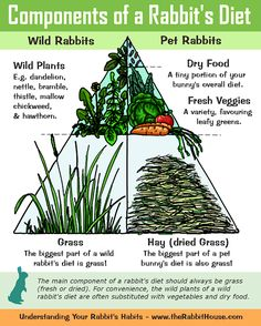 The Components of a Rabbits Diet - Hay/Grass, Commercial Dry Food and Fresh Plants & Vegetables
