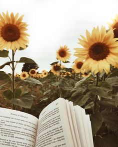 sunflower and book