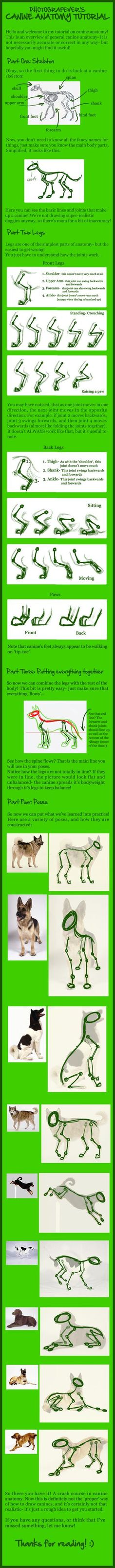 GIANT CANINE ANATOMY TUTORIAL by *photografever on deviantART