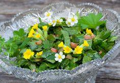 RETSPETID! Rohelised road metsikutest taimedest - küllaga vitamiine ja värsket energiat - Alkeemia