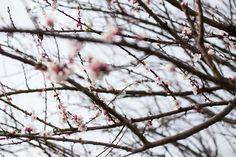 """Per Taste & More n°26 """"Era una primavera incerta. Il tempo, sempre mutevole, spingeva in volo sulla terra nuvole azzurre e viola. In campagna i contadini guardavano i campi con apprensione; a Londra gli ombrelli venivano aperti e poi chiusi...Read The Post"""