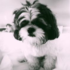 Awwww :) this looks like my baby Sophie!