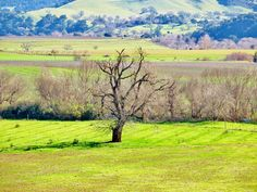 Taken Monday January Santa Ynez Valley, January, Country Roads, Photos, Painting, Art, Art Background, Pictures, Painting Art