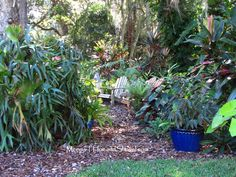 Hoe and Shovel: Partial Shade Plants