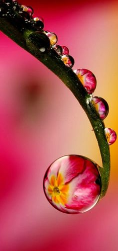Water Droplets and Reflections in pink green yellow - Macro Photography Expression
