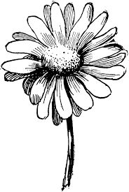 flower pea sweet tattoo daisy clipart paisley single google flowers tattoos