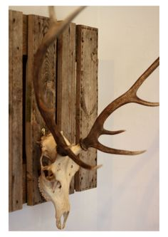 (c) SophieRoseIllustration (c) Rabbit&Rose  Red Deer skull with handmade mount