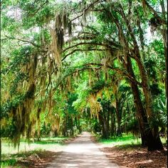 Locals often day trip to Daufuskie Island - Tour Daufuskie will have golf carts waiting for you upon arrival. It's one of the most adventurous and historical places you can visit.