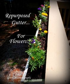 I do some unusual things in my garden. This time I wondered about using a gutter to hook t. Unusual Things, Flower Planters, The Great Outdoors, Repurposed, Joy, Gardening, Outdoor Decor, Flowers, Plants
